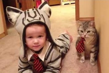toddler-cat